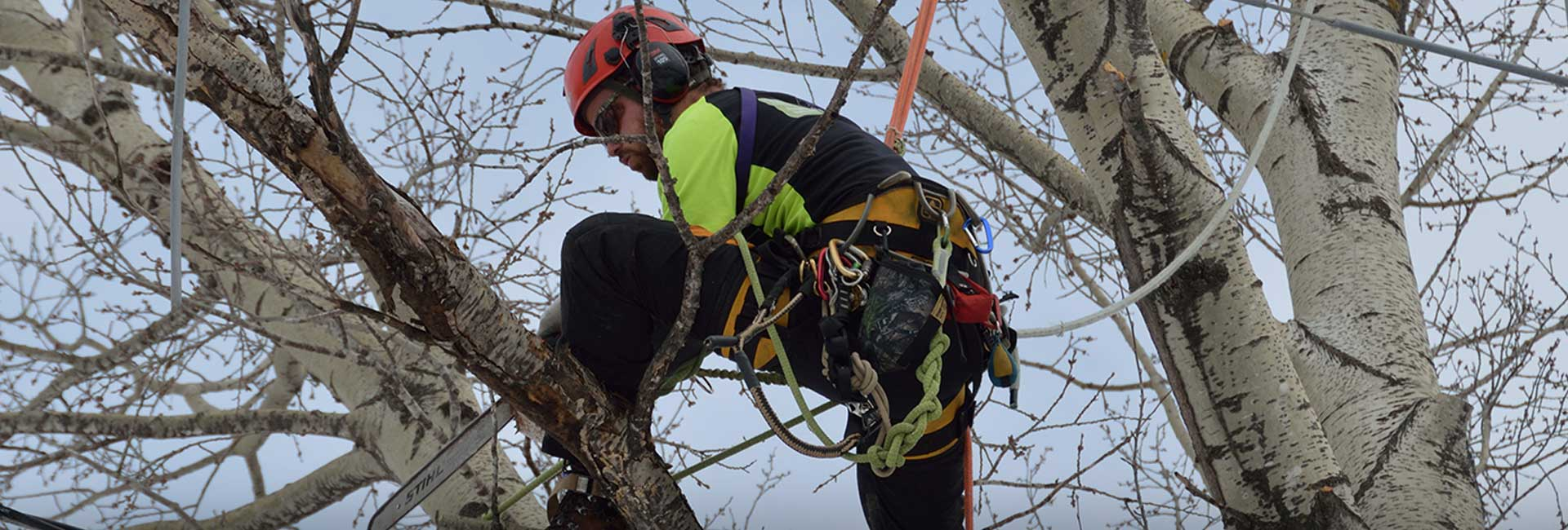 Tree surgeon Leeds, Harrogate, York, Selby, Wakefield & Horticultural contractor Leeds