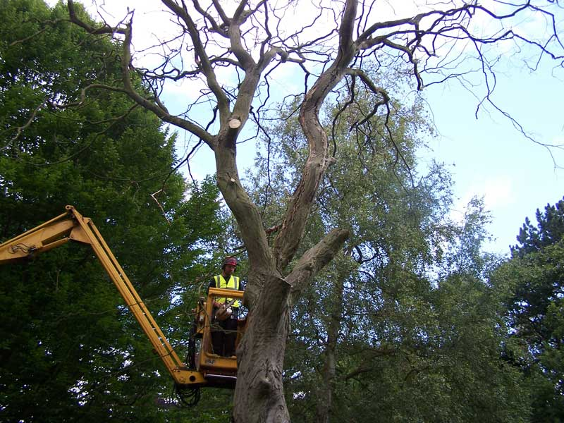 tree felling Leeds