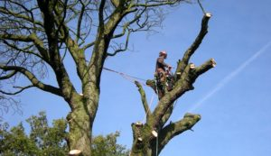 Tree Surgeon Leeds, Horticultural contractor Leeds