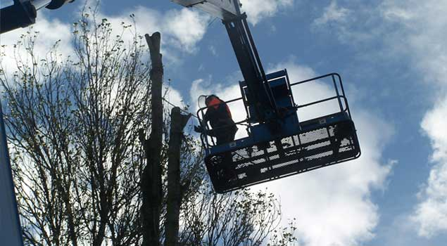 Leeds Tree Surgeon-Harrogate-York-Selby-Wakefield