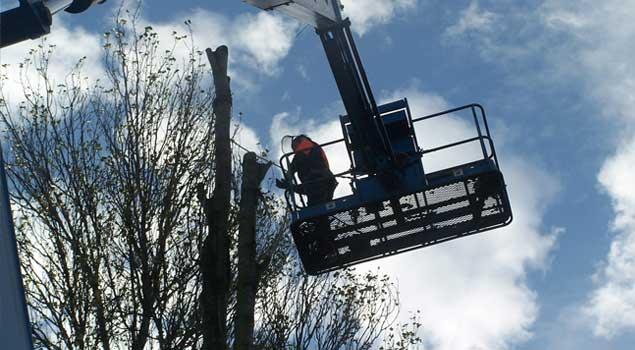 Leeds Tree Surgeon-Harrogate-York-Selby-Wakefield