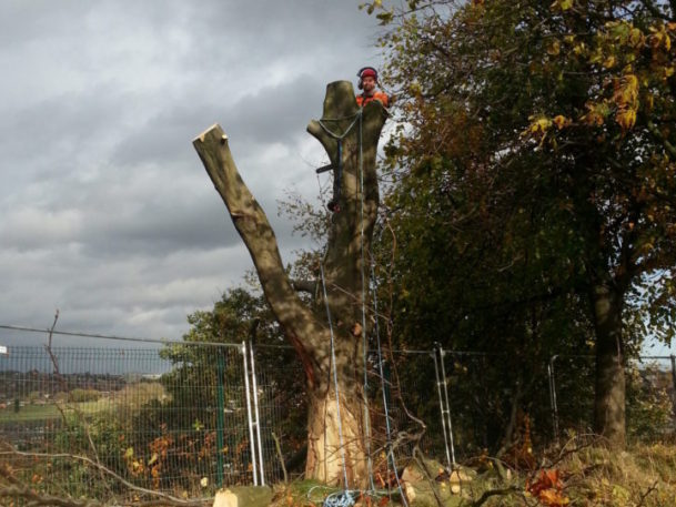 Tree Surgeon Wakefield