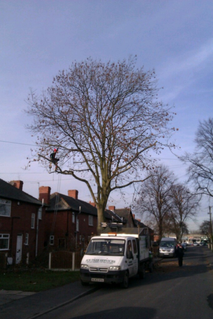 Tree Trimming Leeds