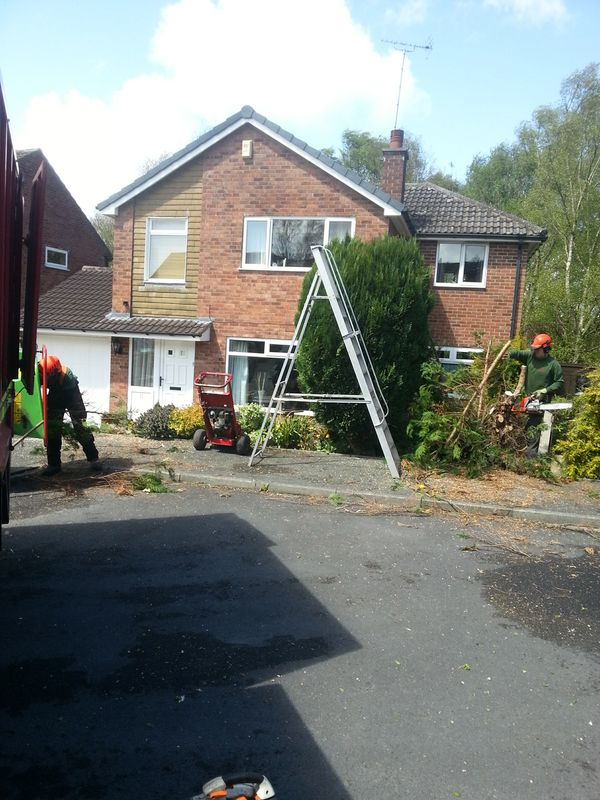 Tree Work Leeds