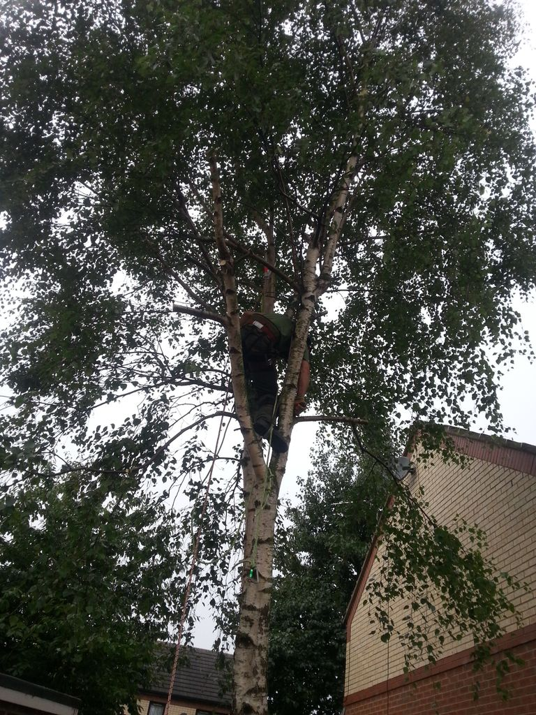 Tree Felling Kippax