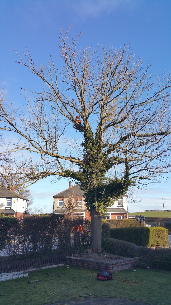 Tree Surgeon Leeds