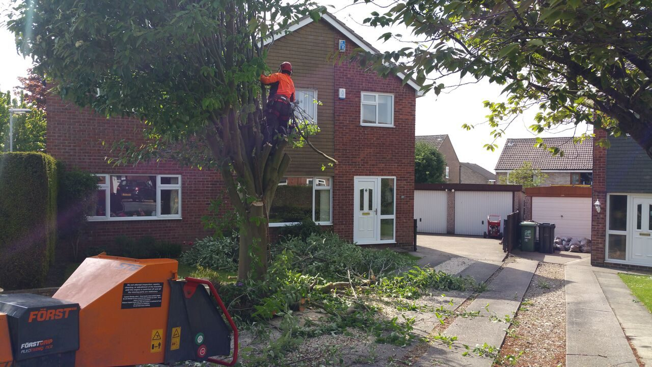 Tree Surgeon Wetherby
