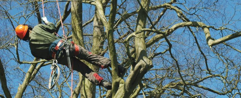 Leeds Professional Tree Services