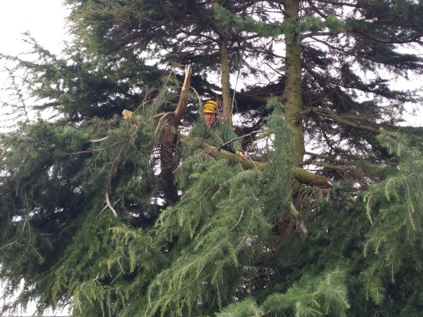 Tree pruning Leeds