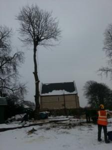 Tree surgeon Harrogate