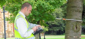 tree surveys-inspection-reports