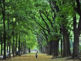 tree surveys-inspection-reports