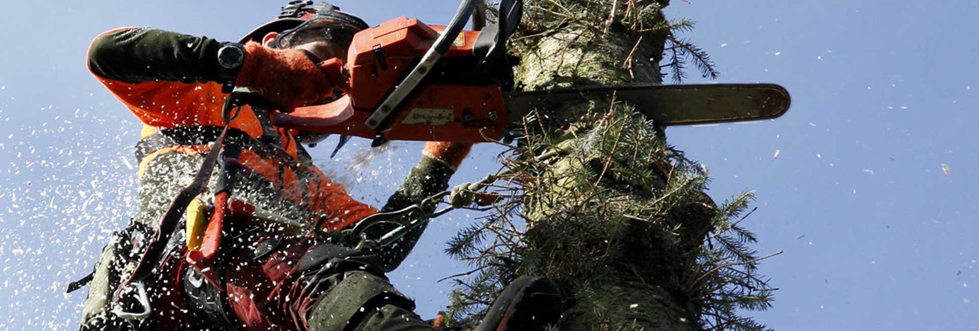 Tree Surgeon Leeds