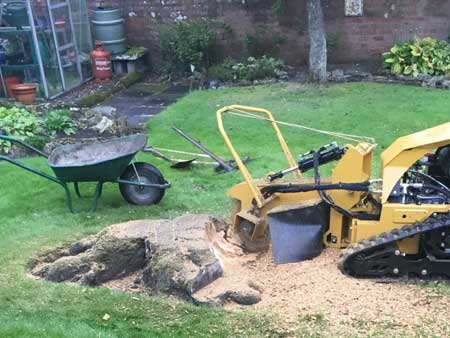 Leeds Tree Stump Removal | Tree surgeon Leeds