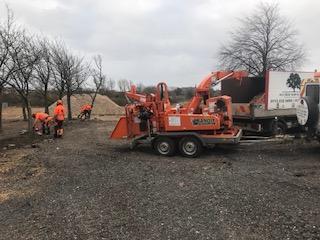 Tree clearance Leeds