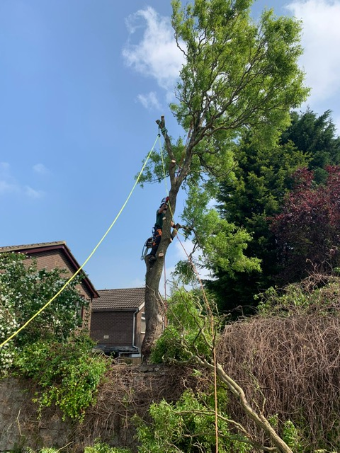 Tree Removal Selby
