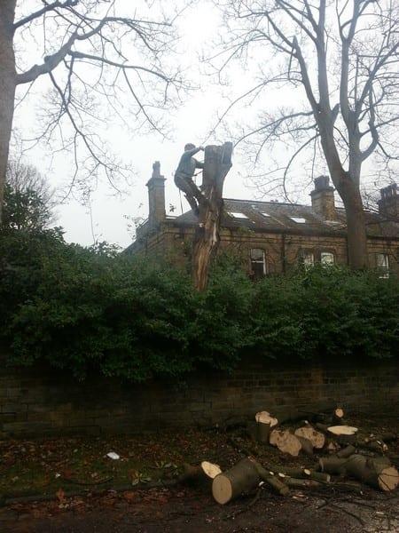 Leeds Tree Stump Removal Service