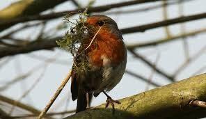 Nesting Bird Season Tree Cutting